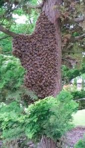 Wild bees.