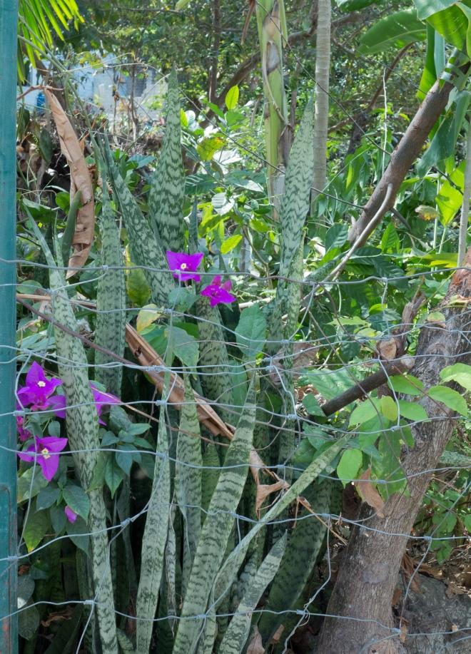 Yalapa_flowers