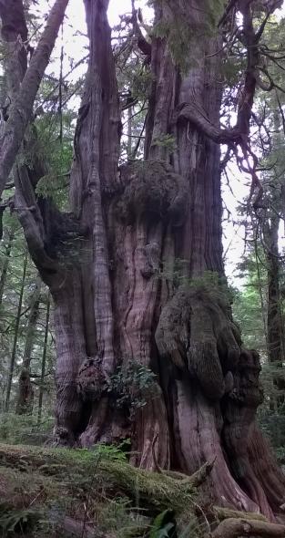 big tree 5
