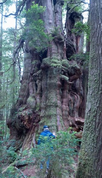 big tree 6