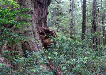 big tree 7