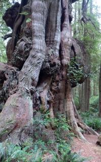 big tree 8